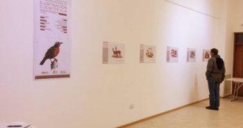 Expo Ilustración Científica Medasur