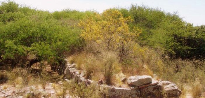 Cerro de los Viejos