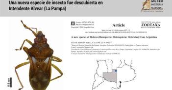 Insecto en Intendente Alvear